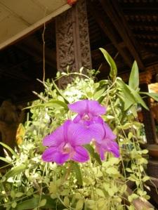 wild orchid at Silver Pagoda, Phnom Penh, Cambodia
